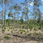 Agroforestry near Somotillo Nicaragua