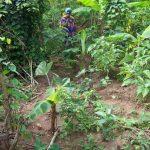 Home garden near Kumasi, Ghana
