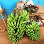 Matooke for sale, Uganda