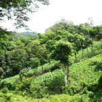 Quesungual agroforesty system - Lempira, Honduras