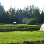 Student farm at the University of British Columbia, Canada