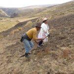 Planting Tarwi (Andean Lupine) in Junin, Peru